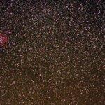 リゲルとバラ星雲