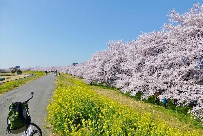 熊谷 桜堤