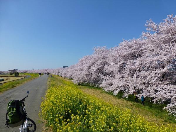 桜!桜!桜!お花見ぎこぎこin荒川